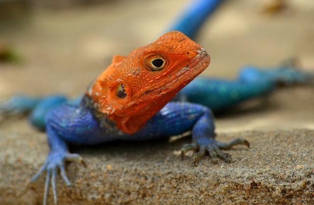Ответственность выбора экзотических животных для дома